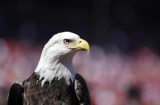 Wind Energy Eagle Deaths_326751