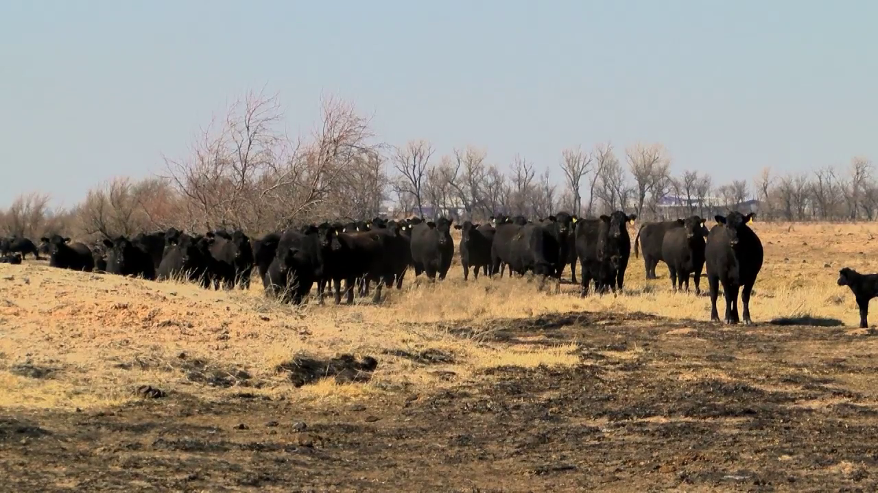 May to be recognized as 'Kansas Beef Month'