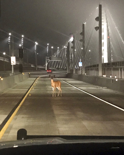 ODD Toll Bridge Deer_438733