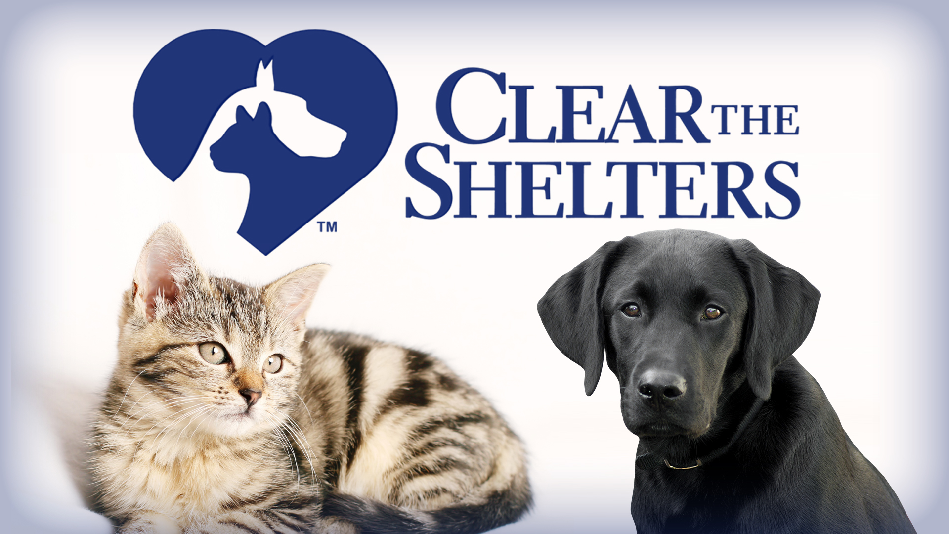 Clear the Shelters_432767