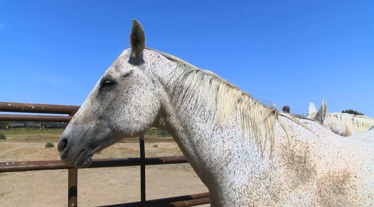 Horse_444817