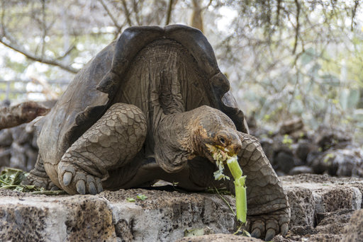 Ecuador Galapagos Turtle_445806