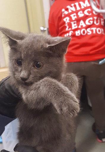 ODD Kitten Rescue-Highway_441461