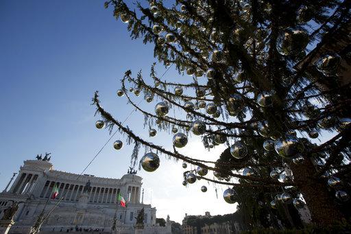 Italy Christmas Tree Needling_493248