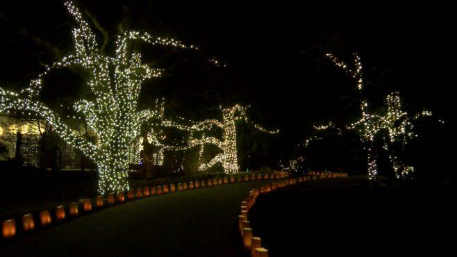 Botanica lights_480699