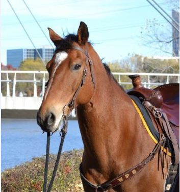 Champ, WPD Mounted Unit_495405