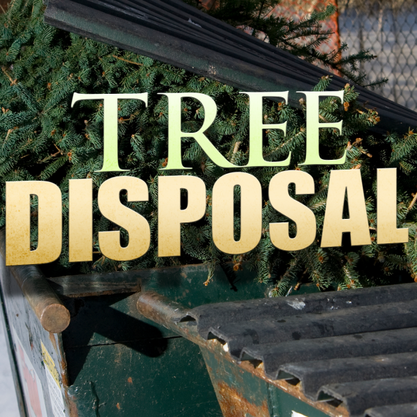 KSNW Trips Tree Disposal 122916 aj_494761