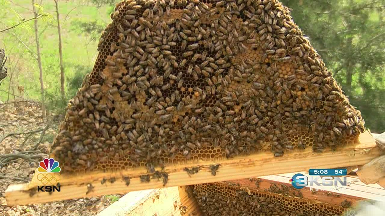 Farmers pay the price for winter toll on bees