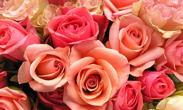 roses-flowers-valentines-day_1517879321399_340223_ver1-0_33247436_ver1-0_640_360_516029