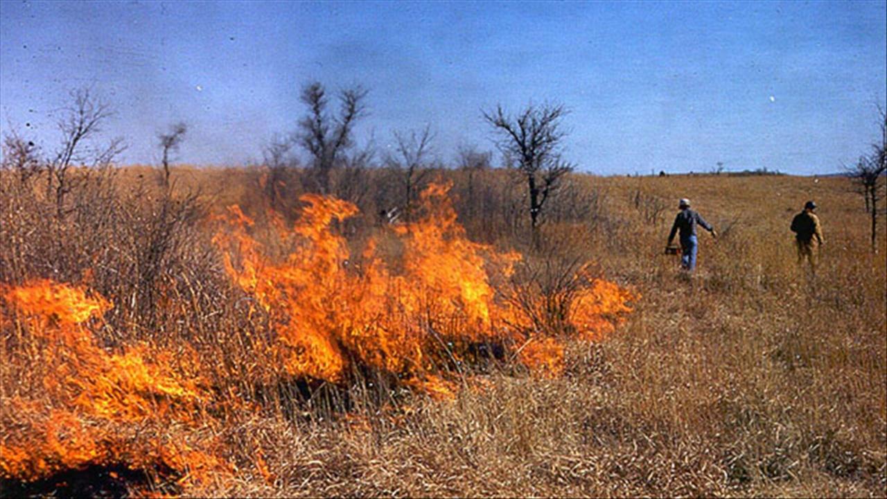 Grass Fire.jpg
