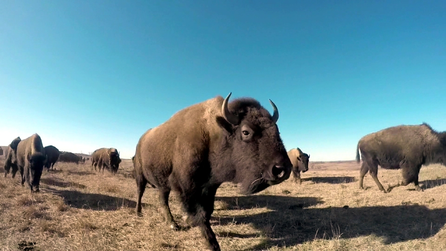 maxwell wildlife park_1520551385613.jpg.jpg