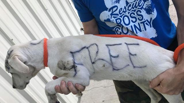 free puppy2_1527379918745.jpg.jpg