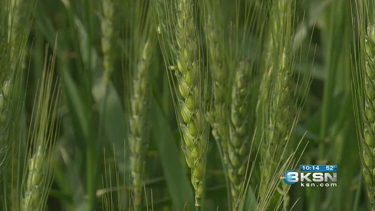 wheat tour_382435