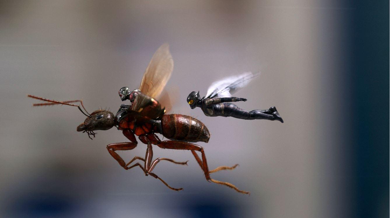 ant man_1531071529167.JPG.jpg