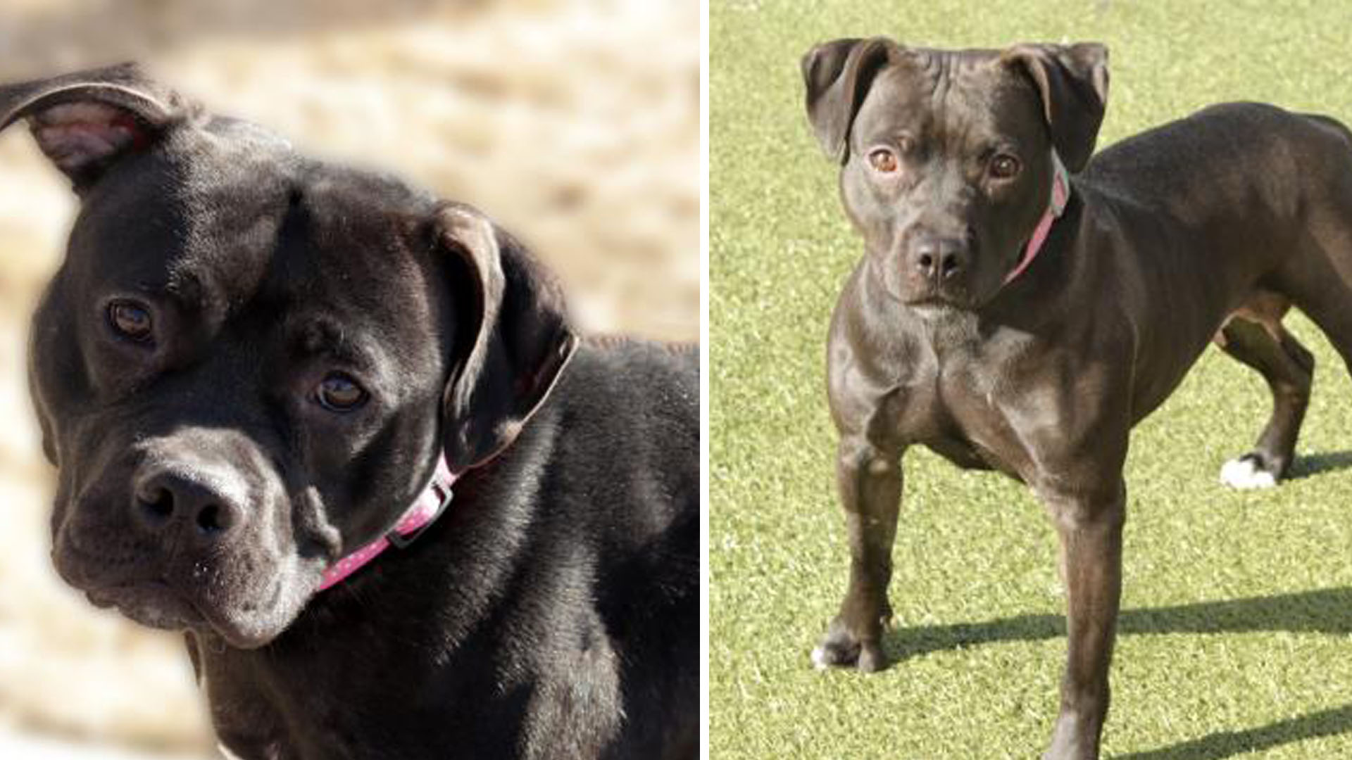 dogs ready for adoption_1549061887462.jpg.jpg