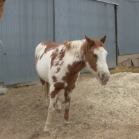 MSK Animal Sanctuary STEPH-PKG-1.transfer_frame_1271_1552006706465.jpg.jpg
