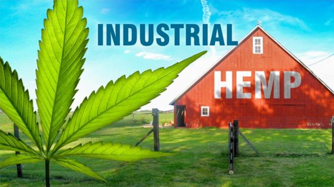 Industrial Hemp_1555361116452.jpg.jpg