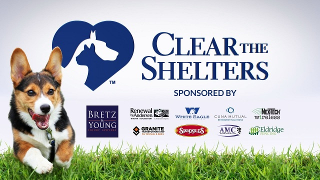 Today's the Day: Let's Clear the Shelters