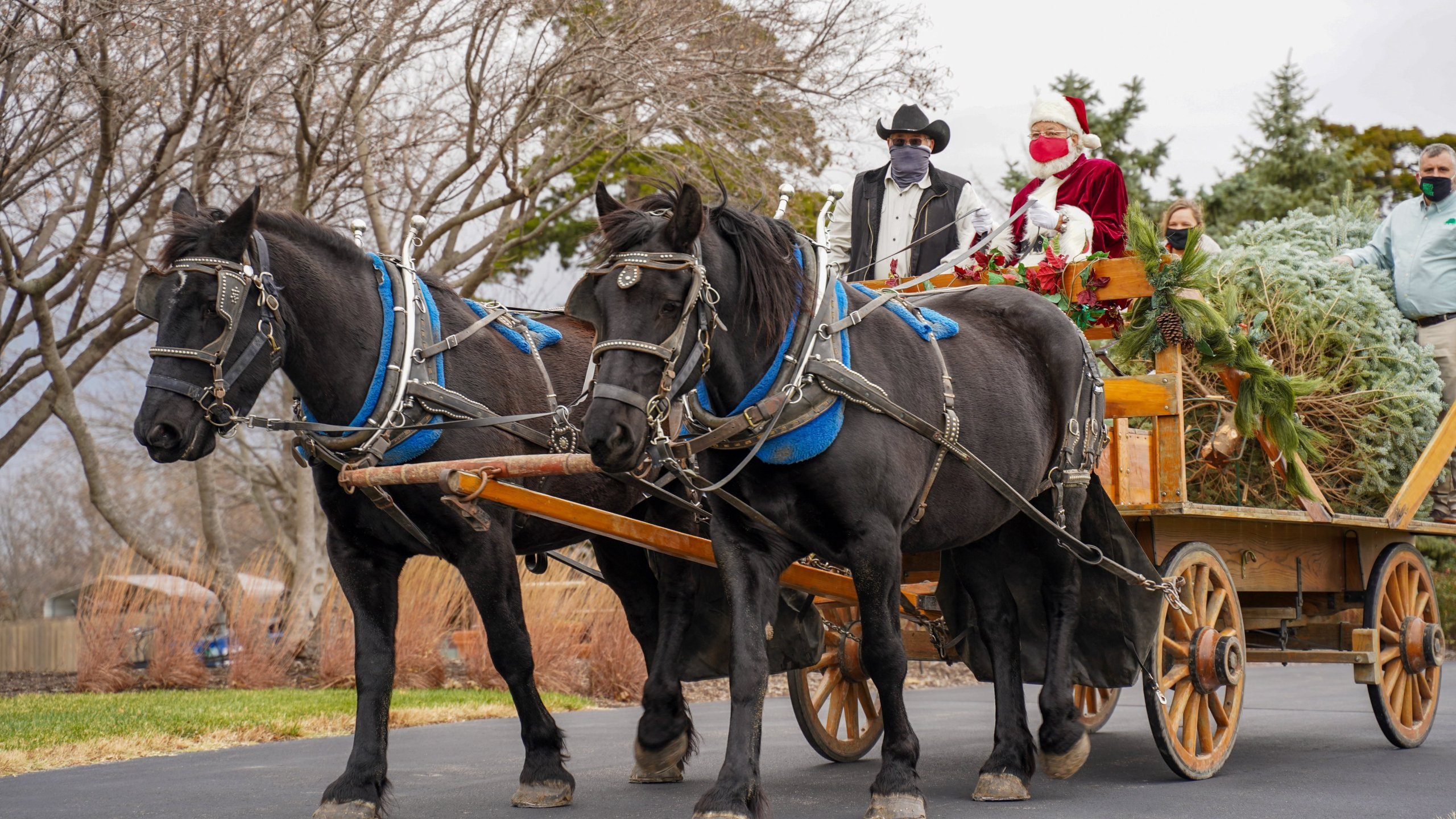Governor welcomes Christmas tree carried by horse drawn carriage